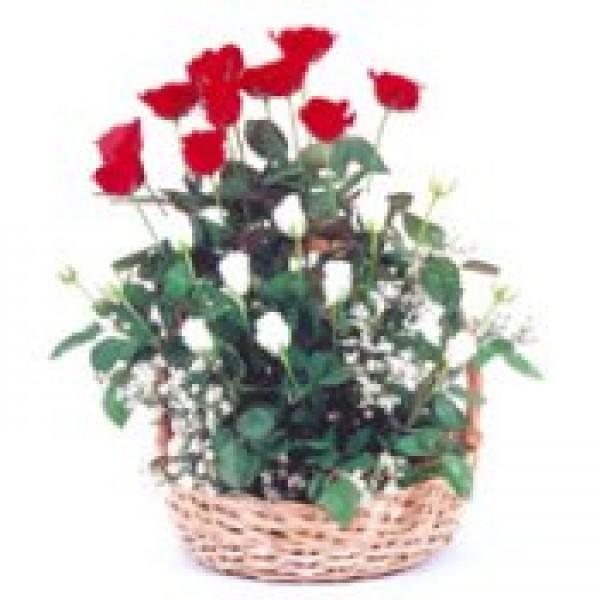 Romance in a Bloom 72447
