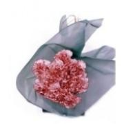 Sweet Carnations 72075