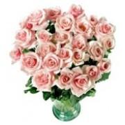 Old Rose 72163
